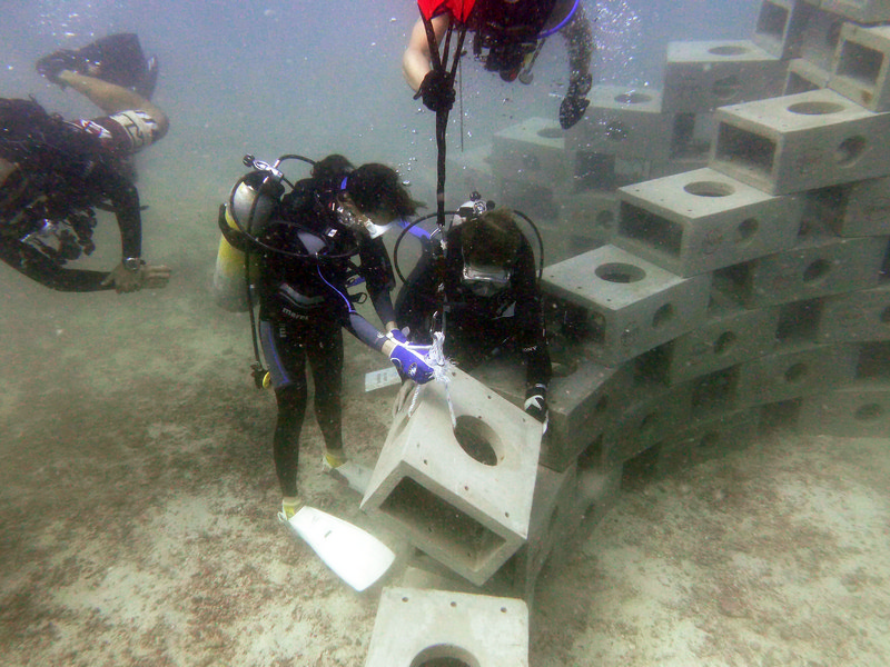 Articial-Reef-Adoption-Oct-2013-011